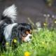 Illustration de  3 dangers du printemps pour votre chien