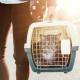 Illustration de  3 astuces pour faire entrer votre chat dans sa cage de transport