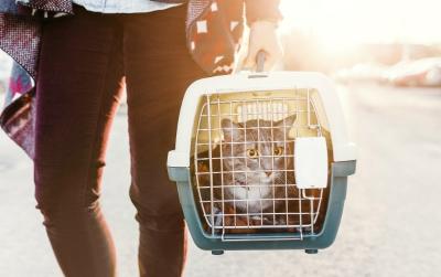 Photo de 3 astuces pour faire entrer votre chat dans sa cage de transport