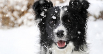 Photo de Comment protéger son chien du froid ?